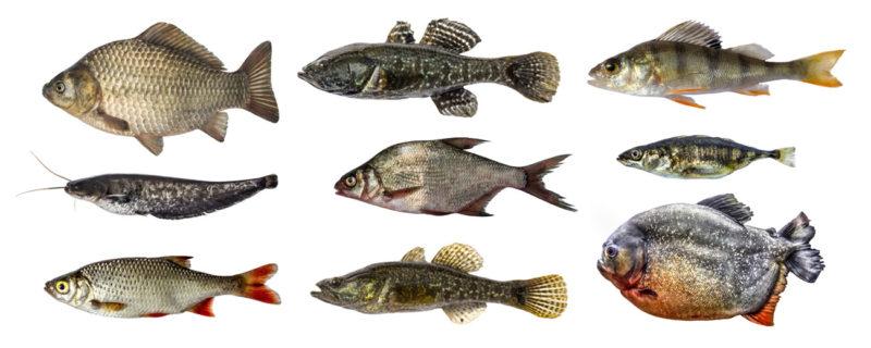 Sportfischer Kurs Hamm